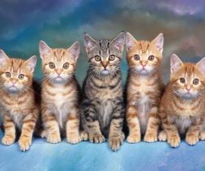 Rompicapo di 5 gatti con lunghi baffi che guarda avanti