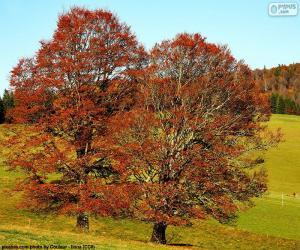 Rompicapo di Alberi a foglie caduche
