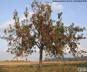 Rompicapo di Alberi di mele