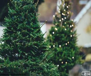 Rompicapo di Alberi di Natale con luci