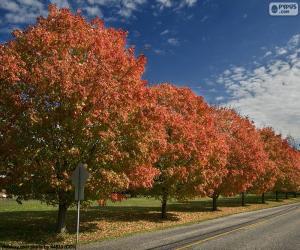 Rompicapo di Alberi in autunno