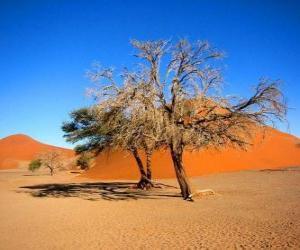 Rompicapo di Alberi nel deserto