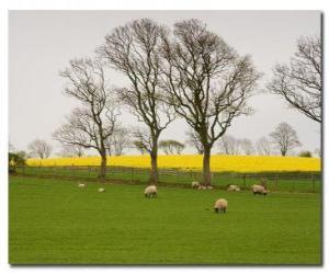Rompicapo di Alberi nella campagna inglese