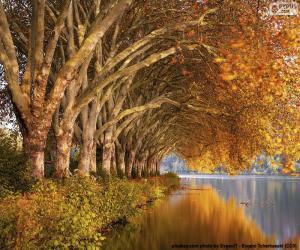 Rompicapo di Alberi sul lago in autunno