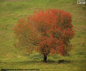 Rompicapo di Albero in autunno
