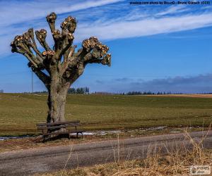 Rompicapo di Albero potati