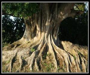 Rompicapo di Albero radici