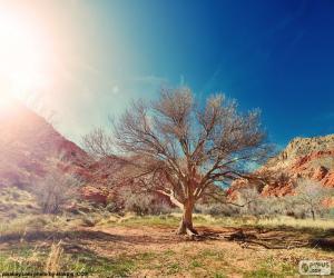 Rompicapo di Albero senza foglie