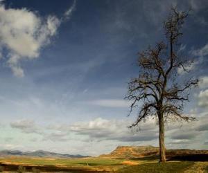 Rompicapo di Albero solitario in un paesaggio con poca vegetazione