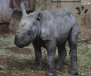 Rompicapo di Allevamento di rinoceronti neri