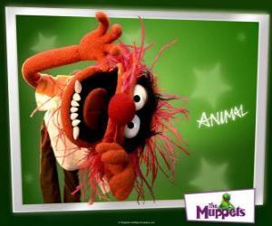 Rompicapo di Animal, il batterista pazzo della banda dal Muppet Show è un uomo primitivo