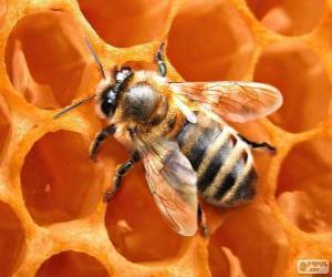 Rompicapo di Ape del miele. Le api che producono miele