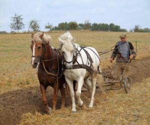 Rompicapo di Arare con cavalli spiana