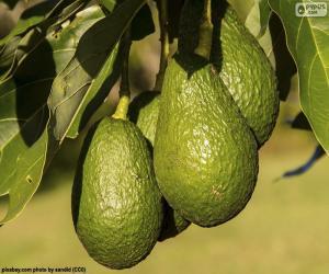 Rompicapo di Avocado nell'albero