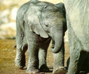 Rompicapo di Baby elephant con la madre