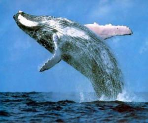 Rompicapo di Balena saltato