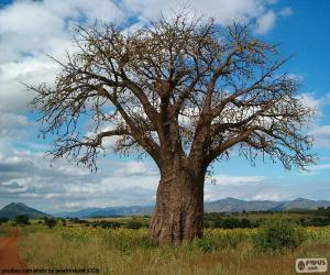 Rompicapo di Baobab africano
