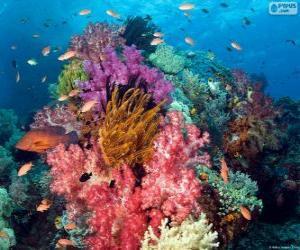 Rompicapo di Barriera corallina