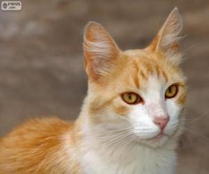Rompicapo di Bel gatto