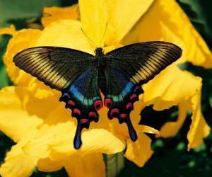 Rompicapo di Bella farfalla su un fiore giallo