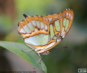 Rompicapo di Bella farfalla