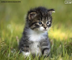 Rompicapo di Bello e carino gattino