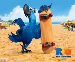 Rompicapo di Blu è un ara divertente e il protagonista principale del film Rio
