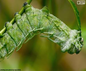 Rompicapo di Bruco verde