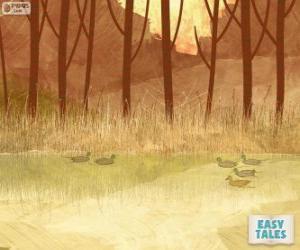 Rompicapo di Brutto anatroccolo, nuoto nel laghetto con i suoi fratelli