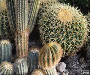 Rompicapo di Cactus