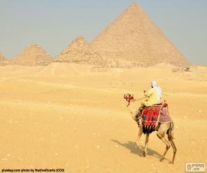 Rompicapo di Cammello fronte su piramidi
