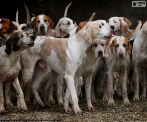 Rompicapo di Cani da caccia