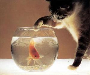 Rompicapo di Cat che guarda un pesce