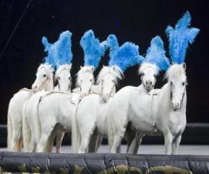 Rompicapo di Cavalli di agire in un circo