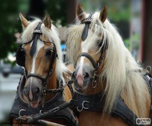 Rompicapo di Cavalli di cambiale