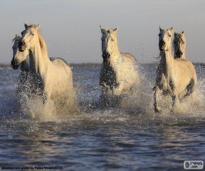 Rompicapo di Cavalli in acqua