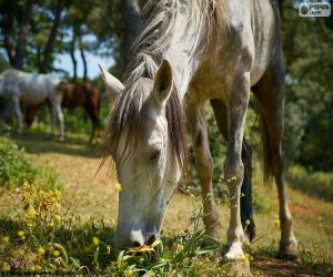 Rompicapo di Cavallo al pascolo