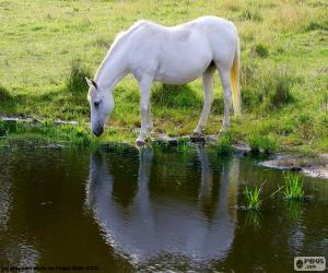 Rompicapo di Cavallo bianco che bere