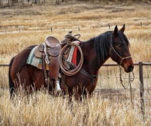 Rompicapo di Cavallo di un cowboy