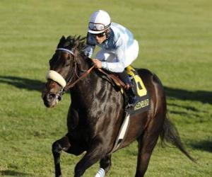 Rompicapo di Cavallo e fantino su una corsa di cavalli all'ippodromo