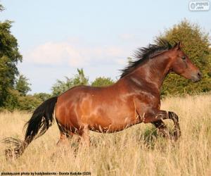 Rompicapo di Cavallo marrone che corre