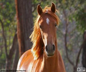 Rompicapo di Cavallo marrone parte anteriore