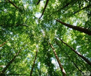 Rompicapo di Cime degli alberi