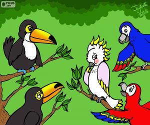 Rompicapo di Cinque uccelli di Julieta Vitali