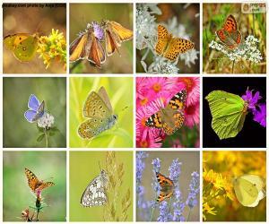 Rompicapo di Collage delle farfalle