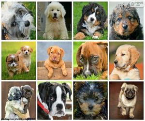 Rompicapo di Collage di cani