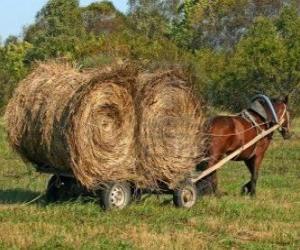 Rompicapo di Coltivatore con un carrello trainato da cavalli
