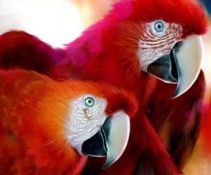 Rompicapo di Compagno di pappagalli