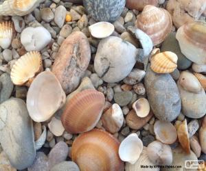 Rompicapo di Conchiglie e pietre del mare