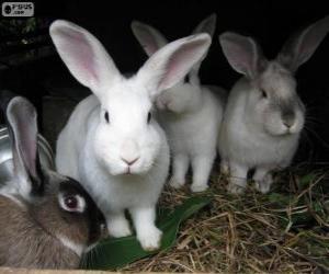 Rompicapo di Conigli nelle sua tana